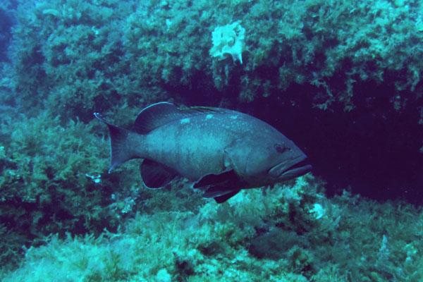 Marine Reserve of the Island of Toro 6